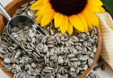 premium quality sunflower kernels for sale - product's photo