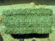alfalfa hay /timothy hay for sale - product's photo