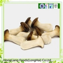 oyster mushroom - product's photo