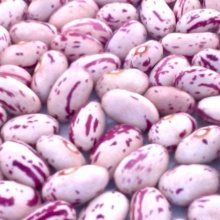 pinto or mottled beans  - product's photo