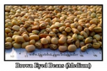 brown eyed beans (medium) - product's photo