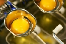 frozen egg yolk liquid - product's photo