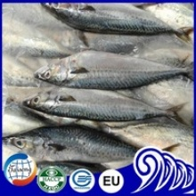 acific mackerel with bait plastic - product's photo