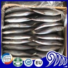 frozen mackerel fish - product's photo