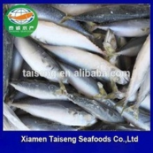 frozen indo-pacific king mackerel - product's photo