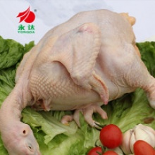 halal quality chicken the whole chicken - product's photo