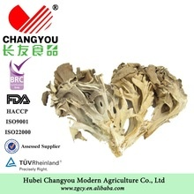 grifola frondosa dried maitake mushroom - product's photo