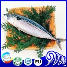 frozen seafood fish frozen mackerel - product's photo