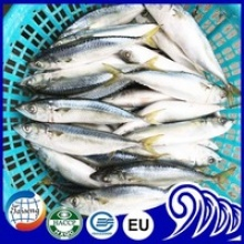 frozen fish whole round pacific mackerel - product's photo