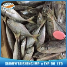 frozen horse mackerel fish - product's photo
