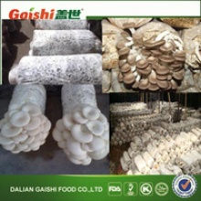 best oystermushroom spawn - product's photo