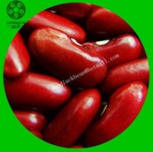 crop long dark red kidney bean - product's photo