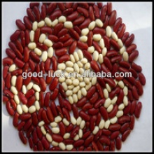crop british red kidney bean - product's photo