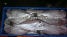 frozen leather jacket fish - product's photo