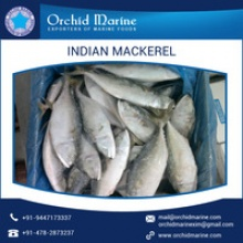 most demanded indian mackerel  - product's photo