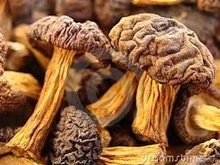 dried mushrooms / morels - product's photo