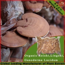 organic ganoderma reishi mushroom - product's photo