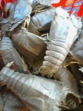 fresh slipper lobster - product's photo