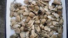 canned straw mushrooms factory - product's photo