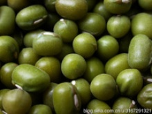 high quality green mung bean - product's photo