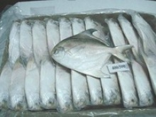silver pomfret - product's photo