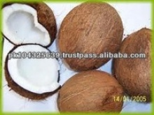 fresh mature coconuts - product's photo
