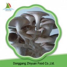 supply high quality oyster mushrooms - product's photo