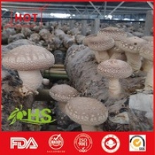 fungus fresh shiitake mushroom - product's photo