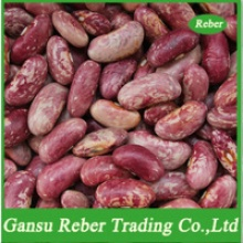 light purple speckled kidney beans - product's photo