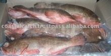 frozen reefcod - product's photo