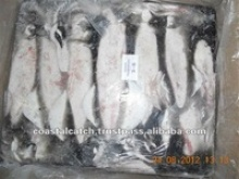 frozen squid whole - product's photo