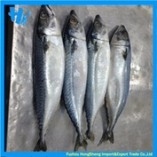 frozen white pacific mackerel whole round - product's photo