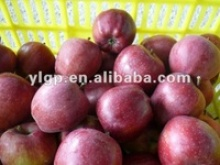 fresh red delicious apple - product's photo