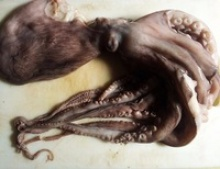 octopus - product's photo