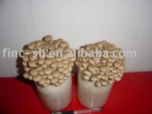 china mushroom shimeji - product's photo