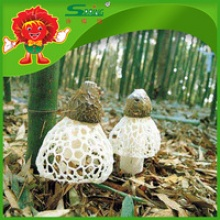 chinese mushroom dried funji artificially cultivated dictyophora - product's photo