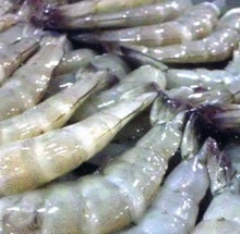 wholesale frozen seafood exporter and trading companies - product's photo