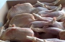 quality halal whole frozen chicken - product's photo