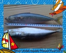 chinese a grade frozen seafood pacific mackerel - product's photo