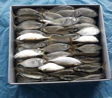 fresh mackerel fish with premium - product's photo