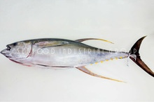 fresh chilled tuna - product's photo