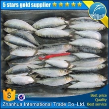 new arrival best price fresh seafood sardine fish on sale - product's photo