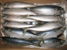 best and cheapest fresh mackerel 400-600g - product's photo
