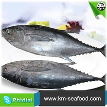 5kg weight fresh tuna fish from fao 61 - product's photo