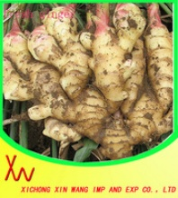 fresh ginger - product's photo