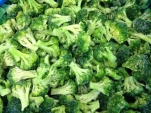 iqf frozen broccoli - product's photo