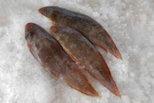 frozen sole fish (whole & fillets) - product's photo