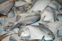 frozen white pomfret fish - product's photo