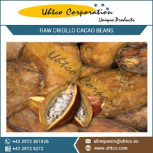 raw criollo cacao beans with best nutrient rich and organic certified - product's photo