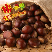 hebei fresh chestnuts--new crop - product's photo